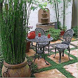 A Typical Spanish Patio