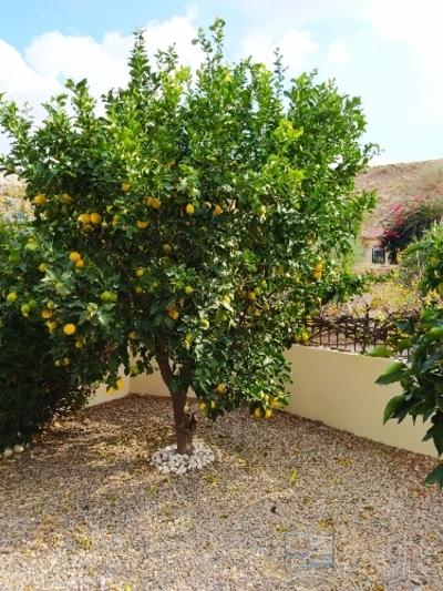 cla7456 Villa Denton : Resale Villa in Arboleas, Almería